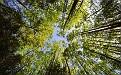 forest-wallpaper-1920x1200-119