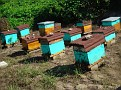 Honey Bee Hives in Mexico   Thank you Octavio Jimenez and your brother Isaac Jimenez in Mexico who tends to the bees  (20)