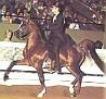 ABASKUS #102554 (*Bask++ x Abalihah, by Aabadan) 1973 chestnut stallion; sired 87 registered purebreds