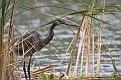 Heron Floating Island