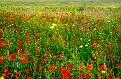 Бурьян Пересыпь Wild grass Peresip