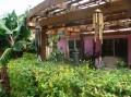 Bob Sylvain's backyard