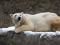071208 Denver Zoo 0364