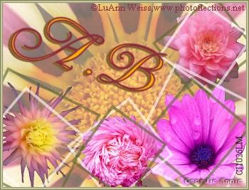 A B LWflowers