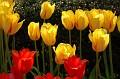 20070505 - Brooklyn Botanical Gardens - 03-sm