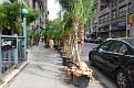 Palms on the street