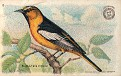 1918 Useful Birds of America Second Series #08 (1)