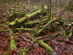 Totholz im grünen Kleid