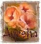Ayesha-peachfloral