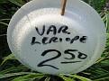 Plants Names DX7 213