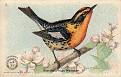 1918 Useful Birds of America Second Series #05 (1)