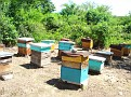 Honey Bee Hives in Mexico   Thank you Octavio Jimenez and your brother Isaac Jimenez in Mexico who tends to the bees  (7)