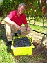Grape Picking at Natali's Vineyard 10-21-09 (29)